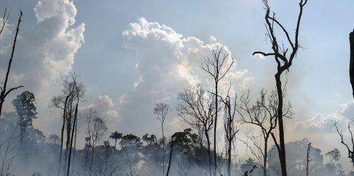 Amazonas: Brasiliens Polizei ermittelt gegen Brandstifter