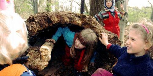 Verband: Wachsendes Interesse an Waldkindergärten