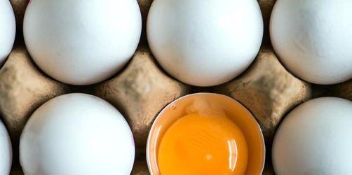 Fünf Supermarktketten betroffen! Eier wegen Salmonellen zurückgerufen