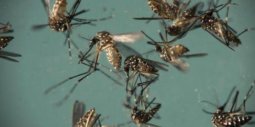 Huml warnt vor Reisen in Zika-Risikogebiete