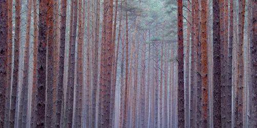 Kaniber will Steuerentlastungen für Waldbesitzer