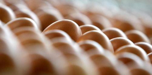 Bayerische Hennen legen 1,1 Milliarden Eier