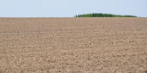 Trockenheit setzt Feldern und Wäldern zu
