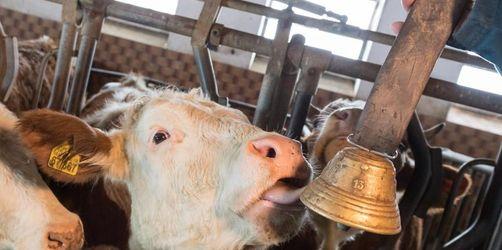 Streit um Kuhglocken geht nach Karlsruhe