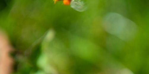 Hilfe für Allergiker: Neues Pollenmesssystem startet