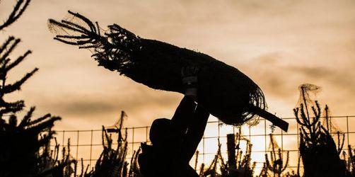 Christbaumbranche erwartet Durchschnittsjahr