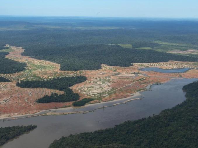 Der Amazonas-Regenwald ist vom Rückgang des Tierbestandes besonders betroffen.