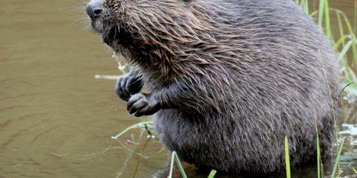 Mega-Projekt zur Verbreitung von Säugetierarten in Europa