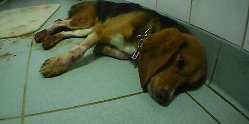 Staatsanwaltschaft ermittelt gegen Tierversuchslabor
