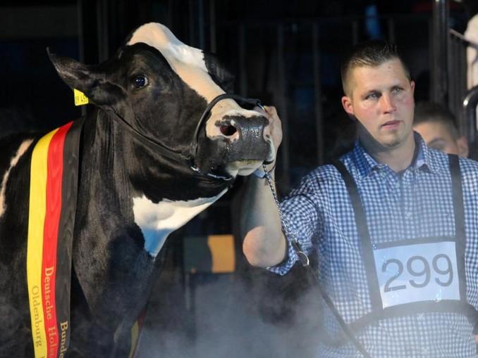 Sie war die Schönste: Landwirt Henrik Wille mit seiner hochdekorierten schwarz-weißen Holstein-Kuh «Lady Gaga». /dpa
