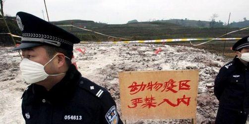 Viertes Vogelgrippe-Opfer in China in einem Monat