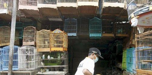 UN-Warnung: Gefahr durch Vogelgrippe nicht gebannt