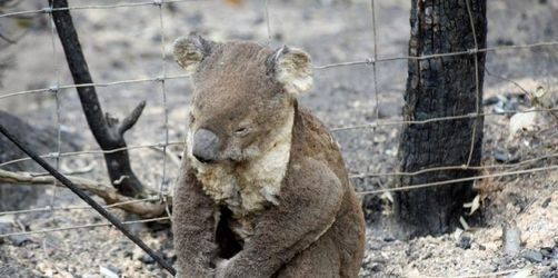 Australische Polizei fasst weiteren Feuerteufel