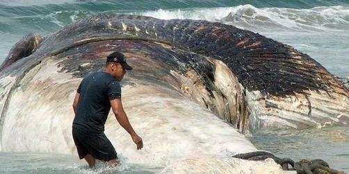 Seltener Blauwal tot in Neuseeland gefunden
