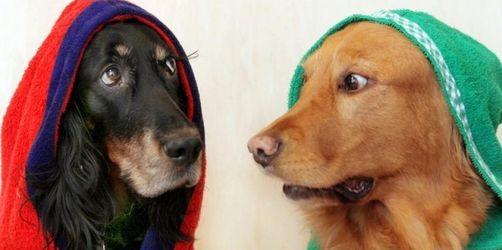 Deutsche geben fünf Milliarden Euro für Hunde aus