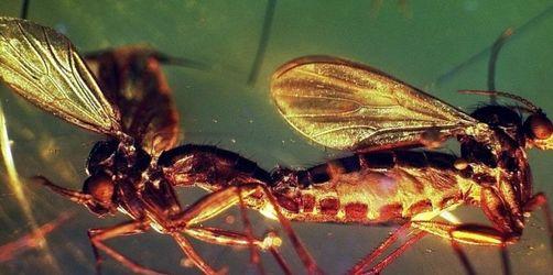 Wiener Radiosender schreckt Mücken ab