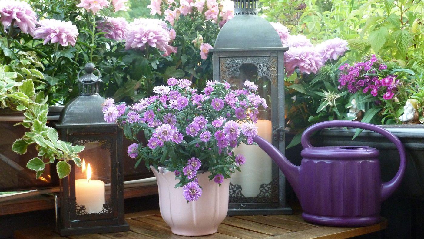 bl hender herbstzauber die sch nsten pflanzen f r ihren. Black Bedroom Furniture Sets. Home Design Ideas