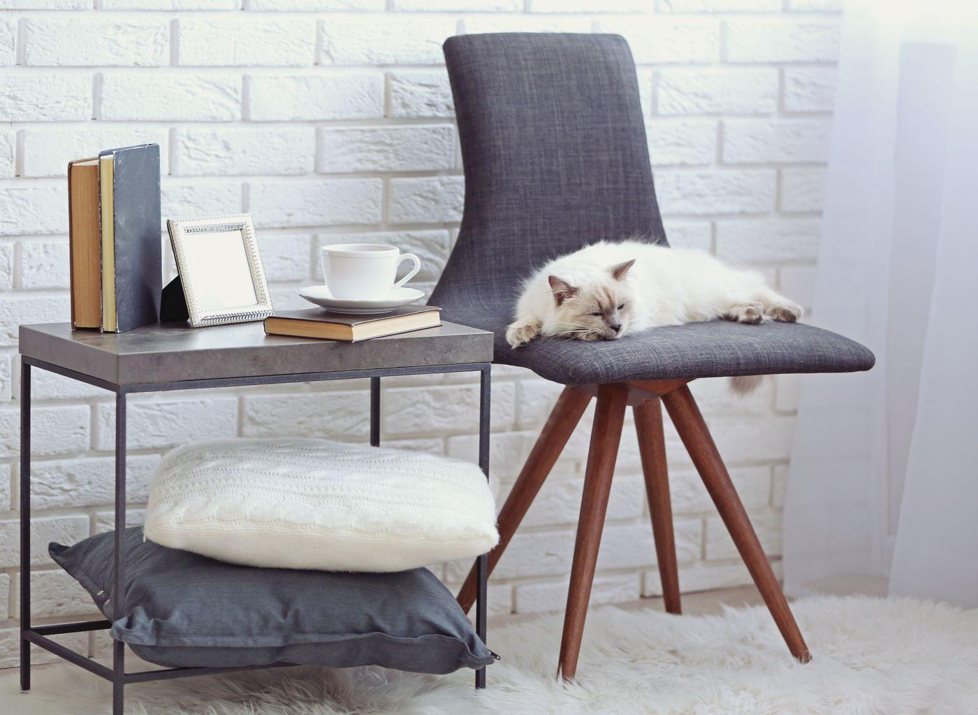 silvester so bringt ihr euer haustier stressfrei ins neue jahr antenne bayern. Black Bedroom Furniture Sets. Home Design Ideas