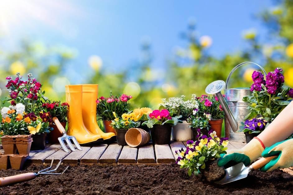 Blumen Baume Beete So Macht Ihr Balkon Und Garten Fit Fur Den