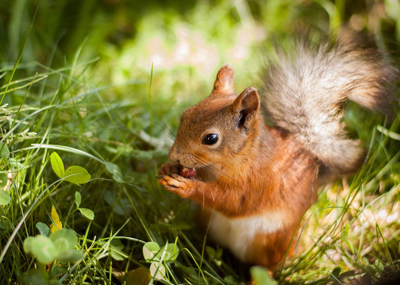 Eichhörnchen Im Garten : eichh rnchen verhungern so schnell k nnt ihr helfen ~ Watch28wear.com Haus und Dekorationen
