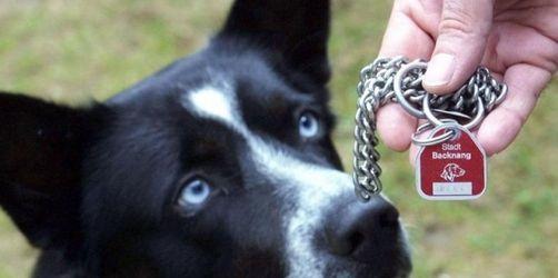Zwei Herrchen - ein Hund: Dog-Sharing wird vor allem in Städten immer beliebter