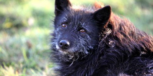 Tierische Senioren: Was zu tun ist wenn Haustiere alt werden