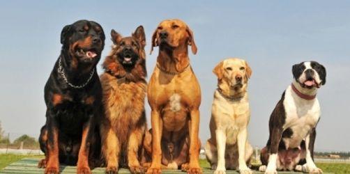 Individelles Futter für Hunde mit Anspruch