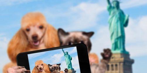 Reisen mit vier Pfoten: Die hundefreundlichsten Urlaubsländer